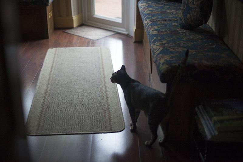cat-in-living-room-shadow