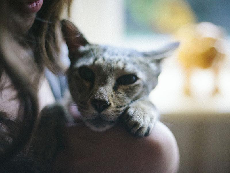 neighbours-pet-cat-sammy-elise-xavier-blog