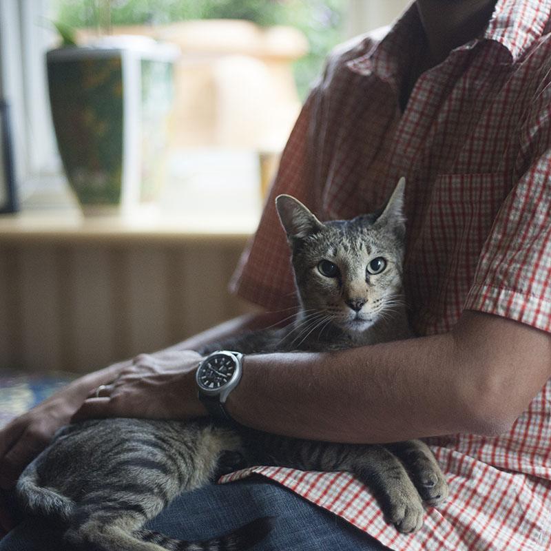 adorable-cat-sitting-in-lap-staring-camera