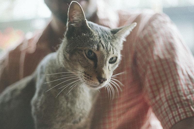 close-up-cat-sammy-neighbours-pet-kitty