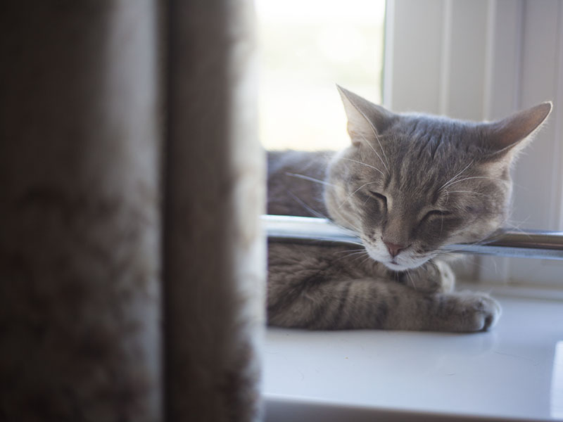 cute-cat-sleeping-pictures-elise-and-thomas-avery