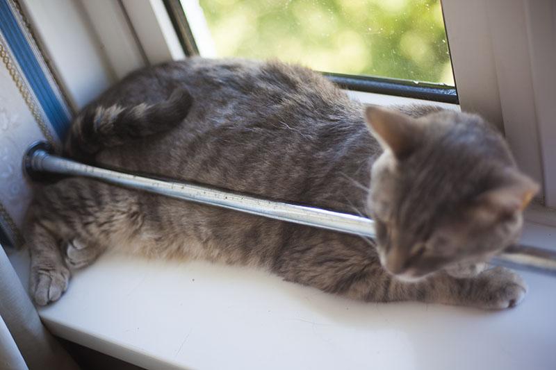 cat-sleeping-on-window-sill-resting-cute