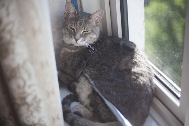 cat-sleeping-comfortably-weird-position-cute