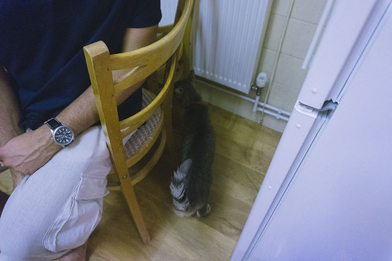 life-update-thomas-cat-tail-behind-chair