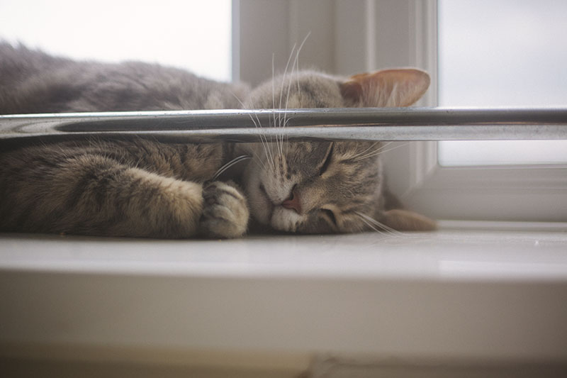 avery-taking-nap-window-sill-sleeping-cat
