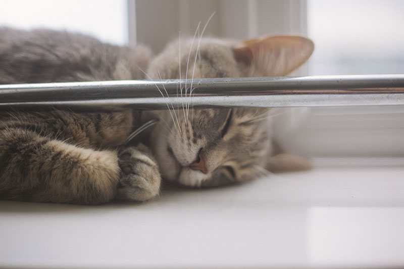 elise-and-thomas-cat-sleeping-pictures-blog
