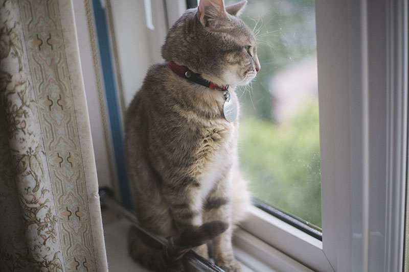 tabby-cat-sitting-window-sill-red-collar-cute
