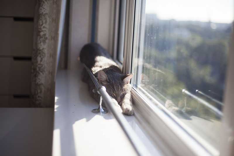 kitty-cat-stretched-out-nap-on-window-sill