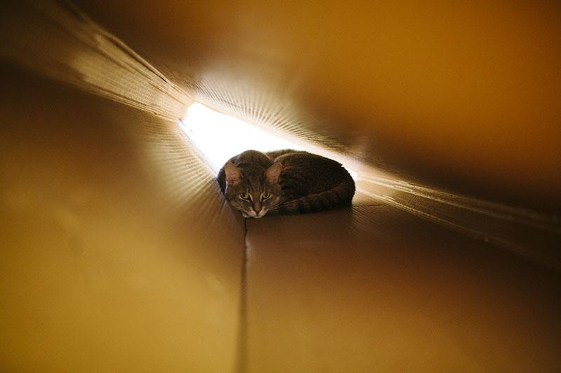 cat-in-a-large-cardboard-box-cute-resting