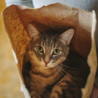 KittyClysm: Cat Training Tips, Cat Product Reviews, & More