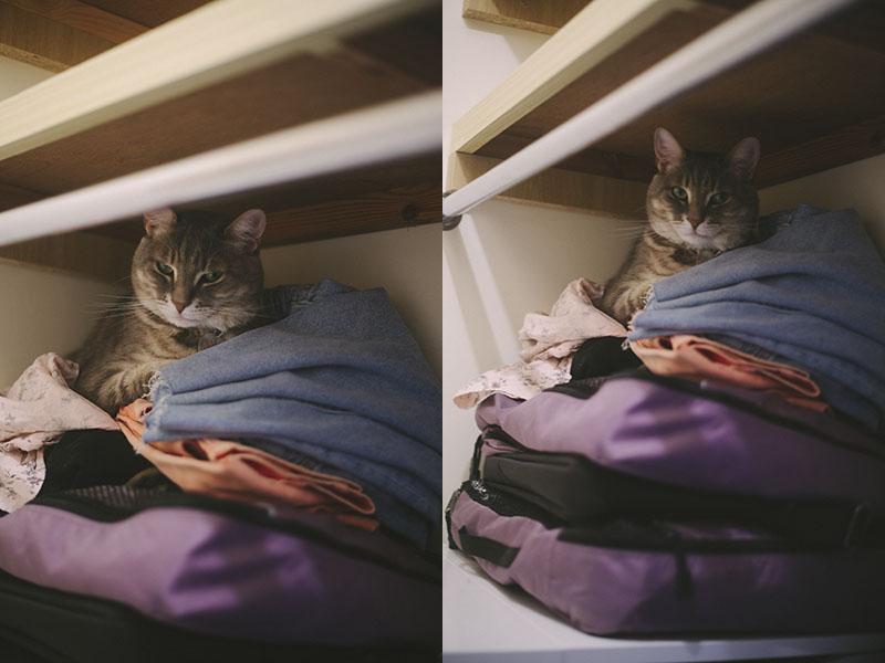elise-and-thomas-pet-cat-avery-sleeping-closet