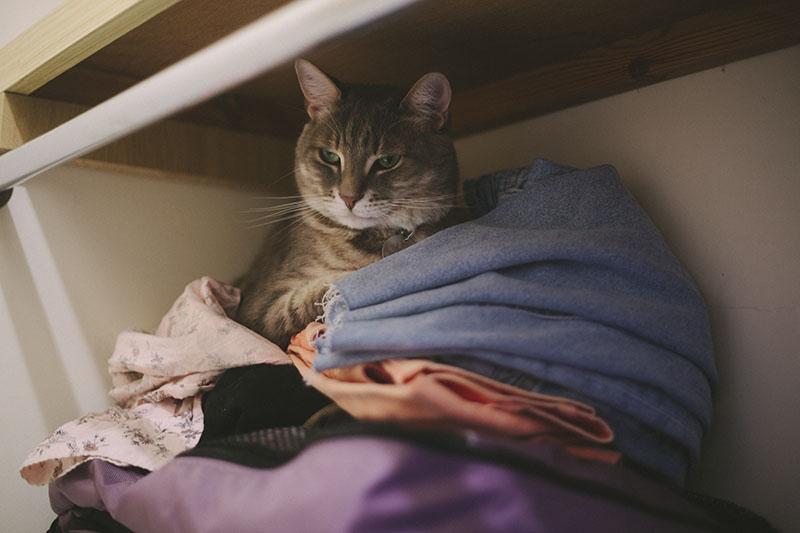kitty-sleeping-in-clothing-elise-and-thomas-avery