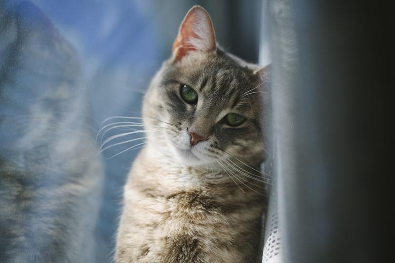 avery-cute-kitty-cold-window-blue