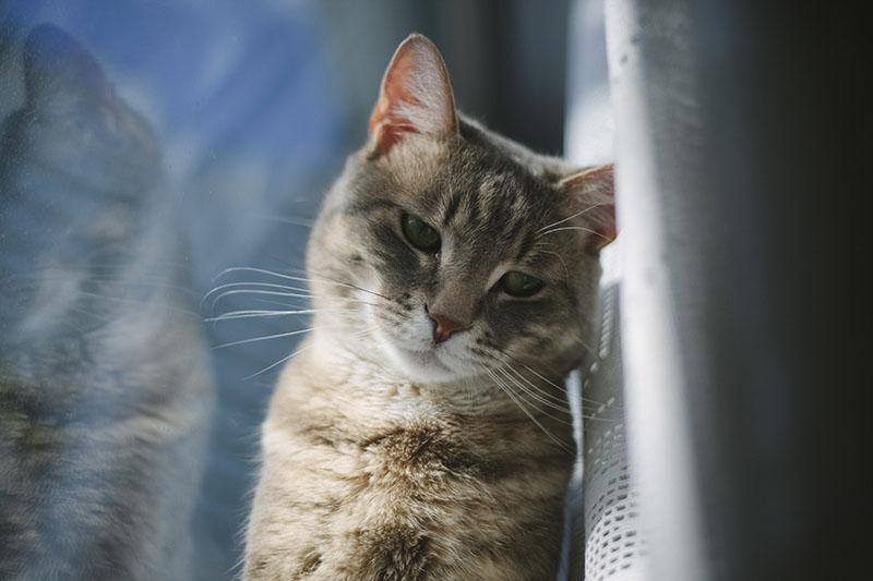 epitomy-avery-cute-cat-by-window-reflection