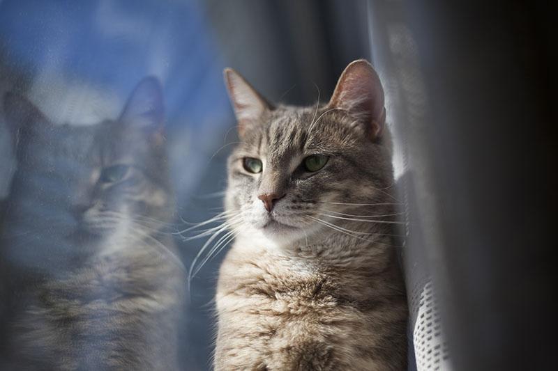 pretty-cat-window-reflection-portrait-picture