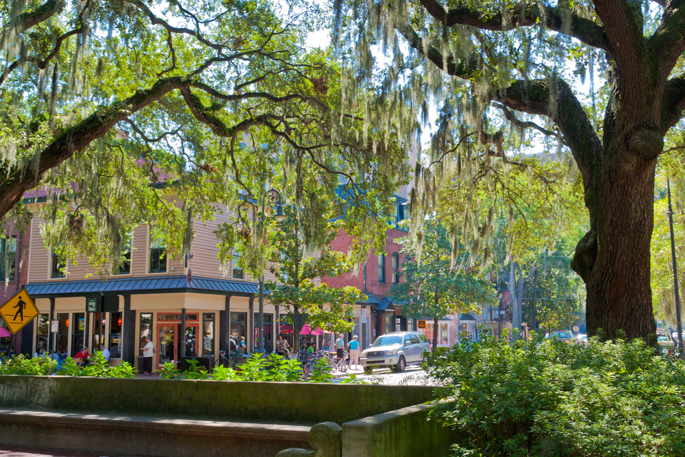 View of a Savannah city street through the branches of oak tress with spanish moss.