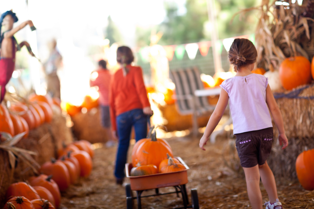 Little Girls Pulling Their Pumpkins In A Wagon At A Pumpkin Patch One Fall Day.