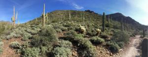 Scottsdale Hiking Trails