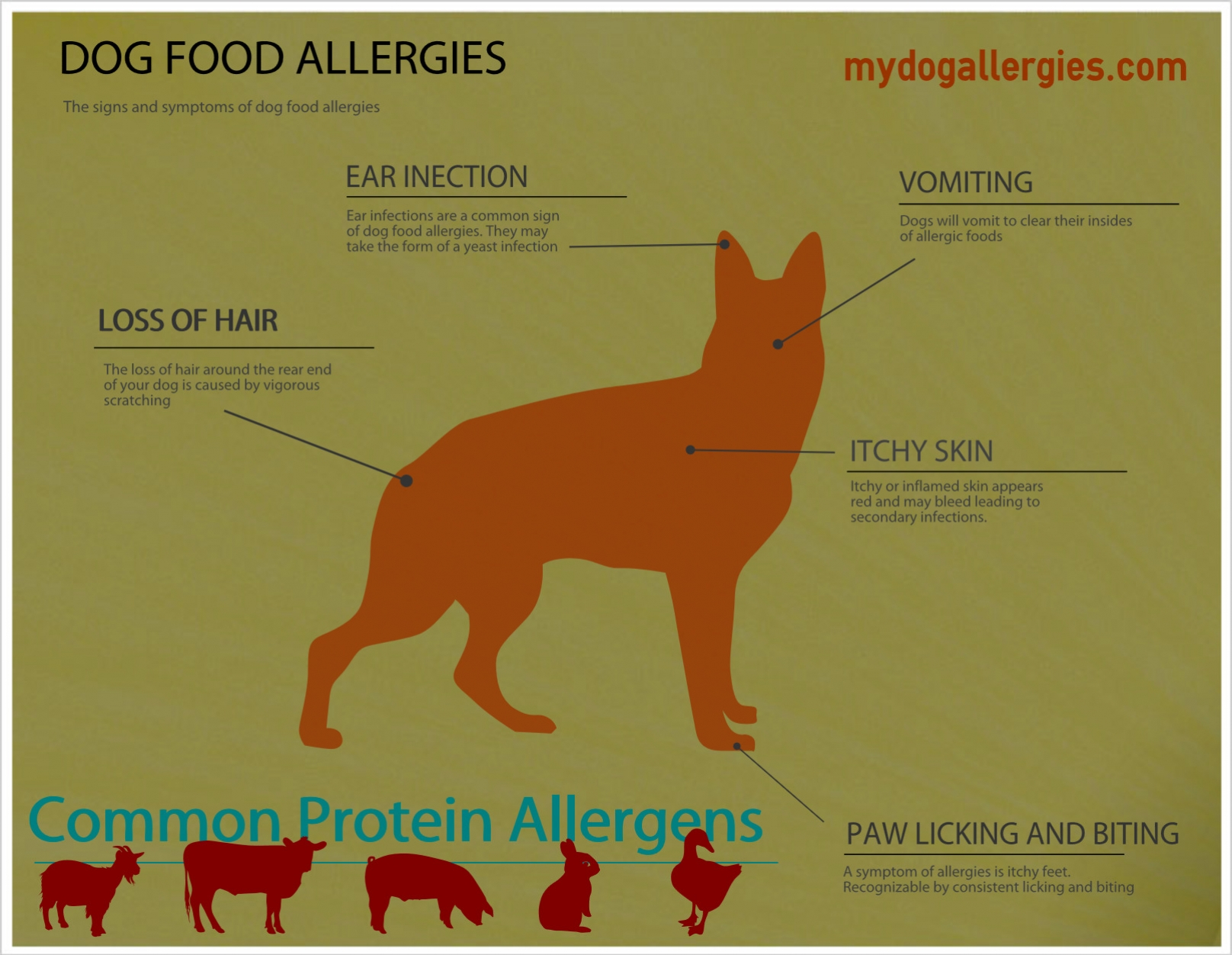 1000 images about dog allergies on pinterest for dogs