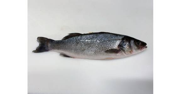 Euro Sea Bass, lb. from Global Market in Madison, WI