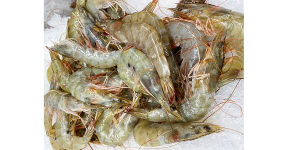 Head-On Shrimp, lb. from Global Market in Madison, WI