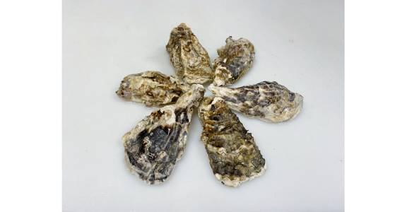 Oyster, each from Global Market in Madison, WI