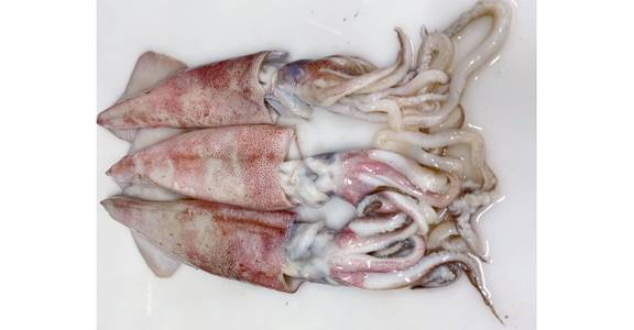 Squid, lb. from Global Market in Madison, WI