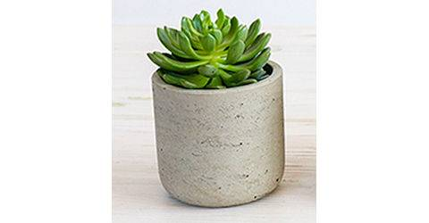 Assorted Succulent or Cactus in Planter from Red Square Flowers in Madison, WI