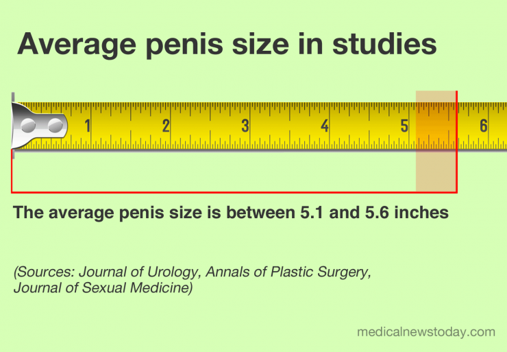 infographic of the average size of a human penis