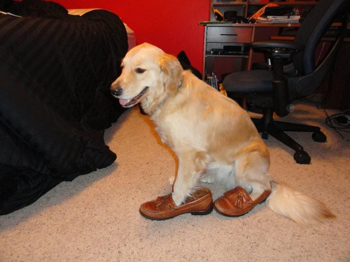 uploads1515440595762 fN3w3QX remembering 'redneck retriever' the internet's favorite dog funny