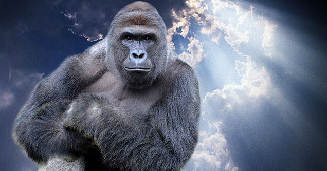 Harambe floating up to heaven after he was shot and killed at the Cincinnati Zoo three years ago after dragging around a child that fell into the enclosure.