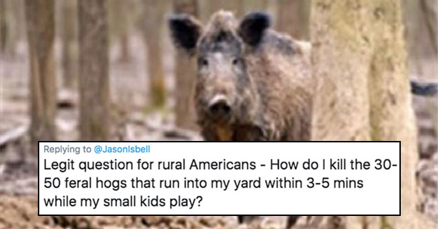 Feral Hogs - Tweet by William NcNabb about killing feral hogs running through his backyard