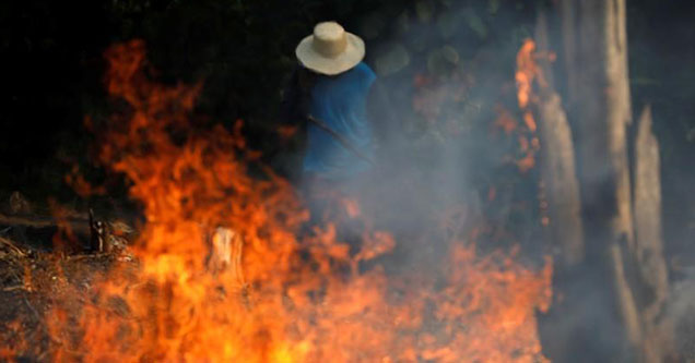Cattle Ranchers likely the cause of the Amazon Forest Fires
