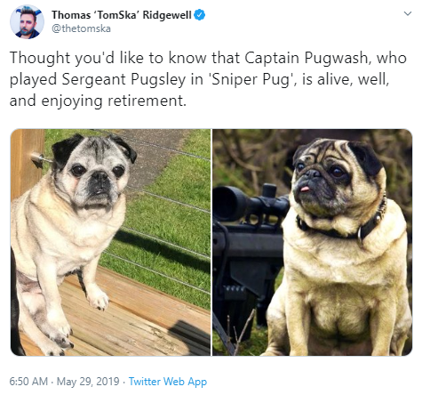 Thomas 'TomSka' Ridgewell @thetomska Thought you'd like to know that Captain Pugwash, who played Sergeant Pugsley in 'Sniper Pug', is alive, well, and enjoying retirement. 6:50 AM · May 29, 2019