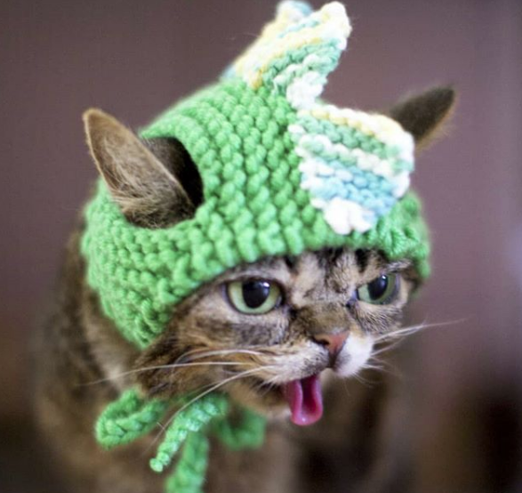 RIP Lil Bub - The world's most famous alien Internet cat.