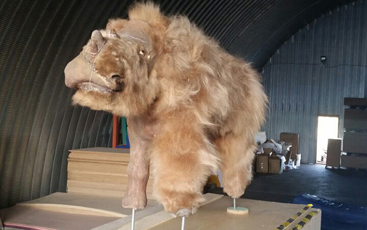 a baby wooly rhino on display