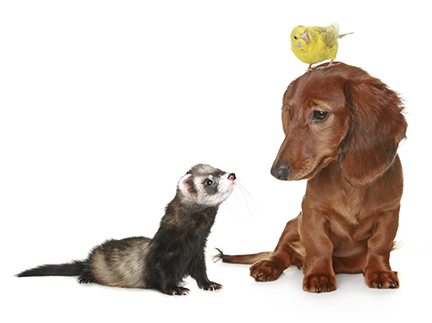 Ferret, Dog and Bird