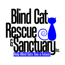 Blind Cat and eBay for Charity