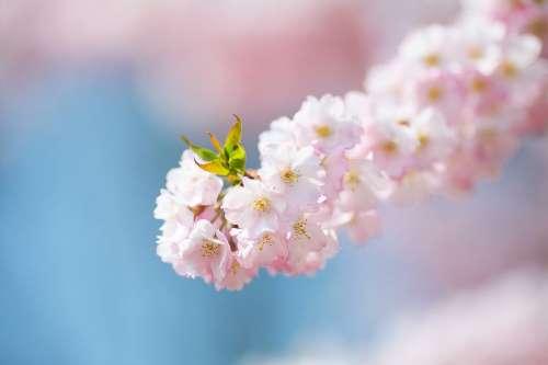 Pink Flower Blossom 01