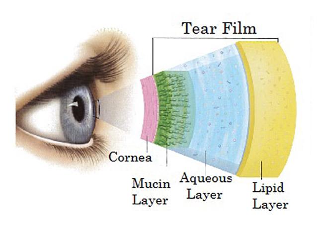 tear filmlayer21
