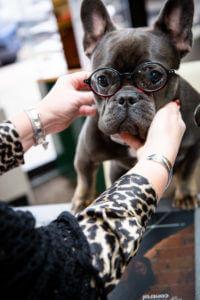 Dr. Mondo's Dog wearing glasses