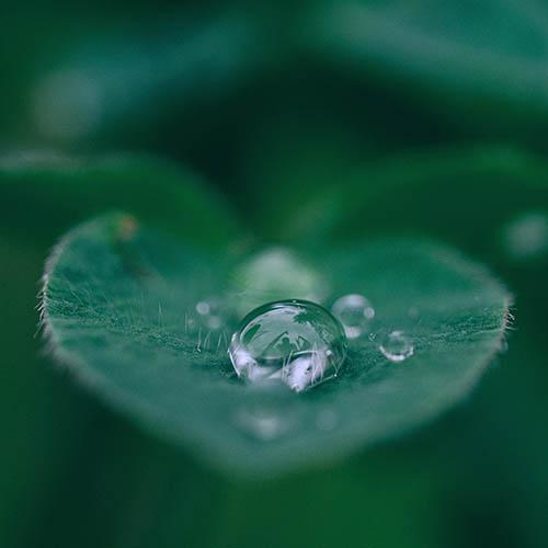 Rain drops on a leaf