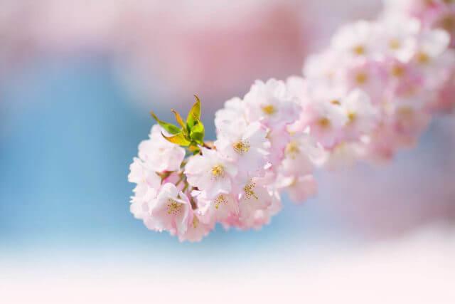 Pink Flower Blossom 1.jpg