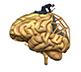 brain rehab
