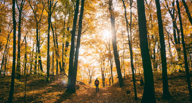 Forest-in-the-fall-color-blind-eye-care-650x350