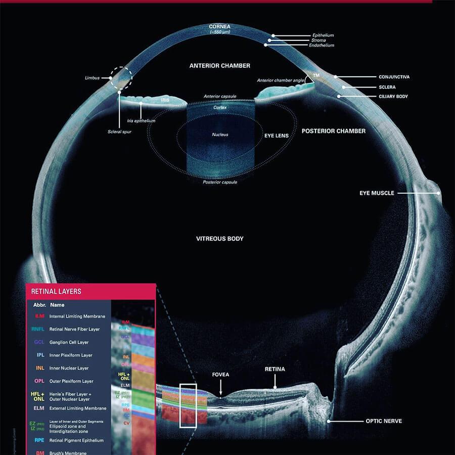 Retinal Layers 900