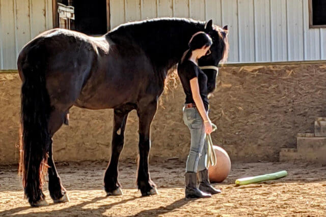 Girl standing next to a horse courtesy of Two Hearts One Language2