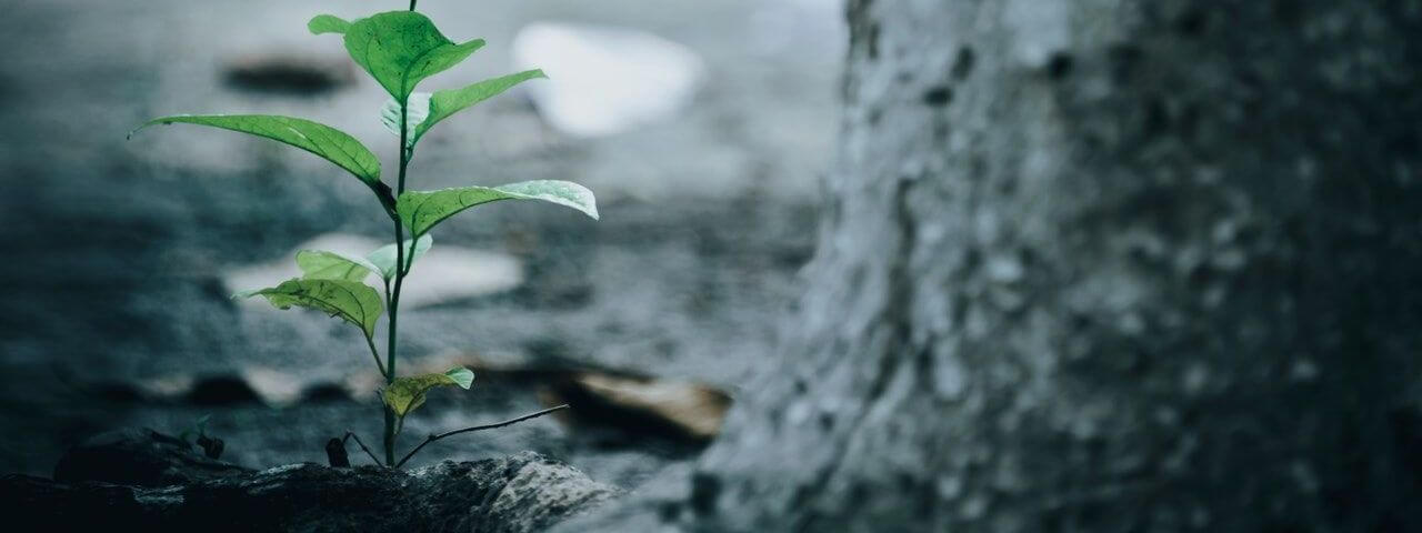 bright ecology environment tree planting