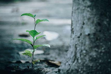 bright ecology environment tree planting 427X284