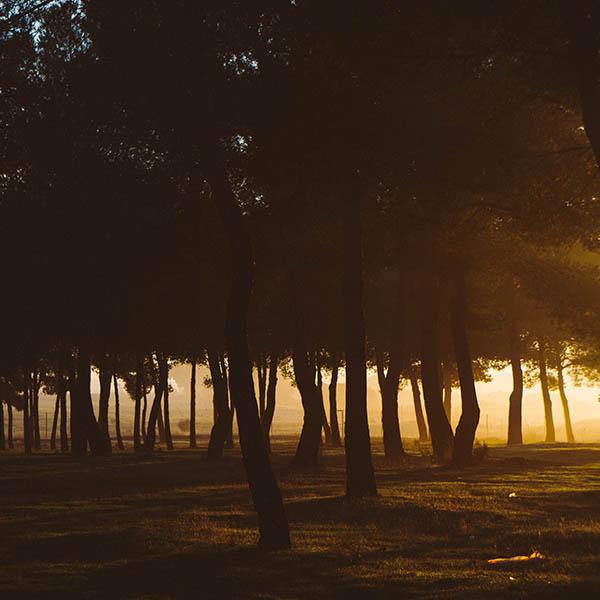 darkness trees 640